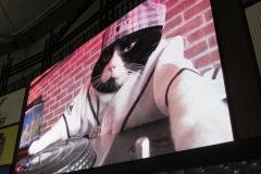 Scoreboard Mixing Cat