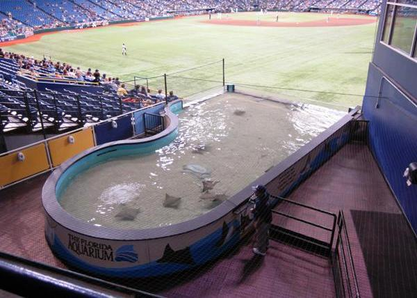 tropicana field tips rays tank
